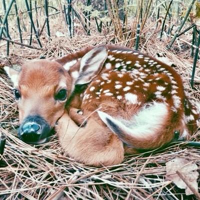 Burnt river Bambi