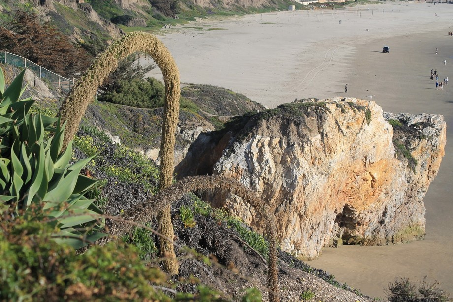 Took this photo at Pismo Beach, California while on vacation in March 2015.