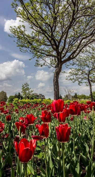 Spring. . .