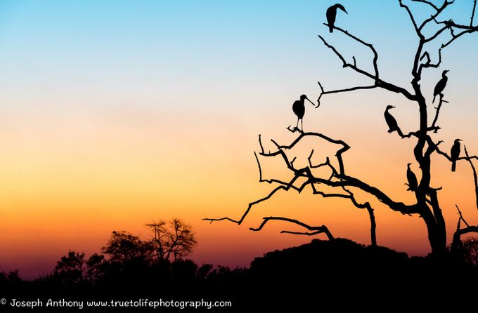 Sunset silhouette at tranquility lake by truetolifephotography - Tree Silhouettes Photo Contest