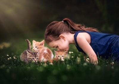 Kitten medley