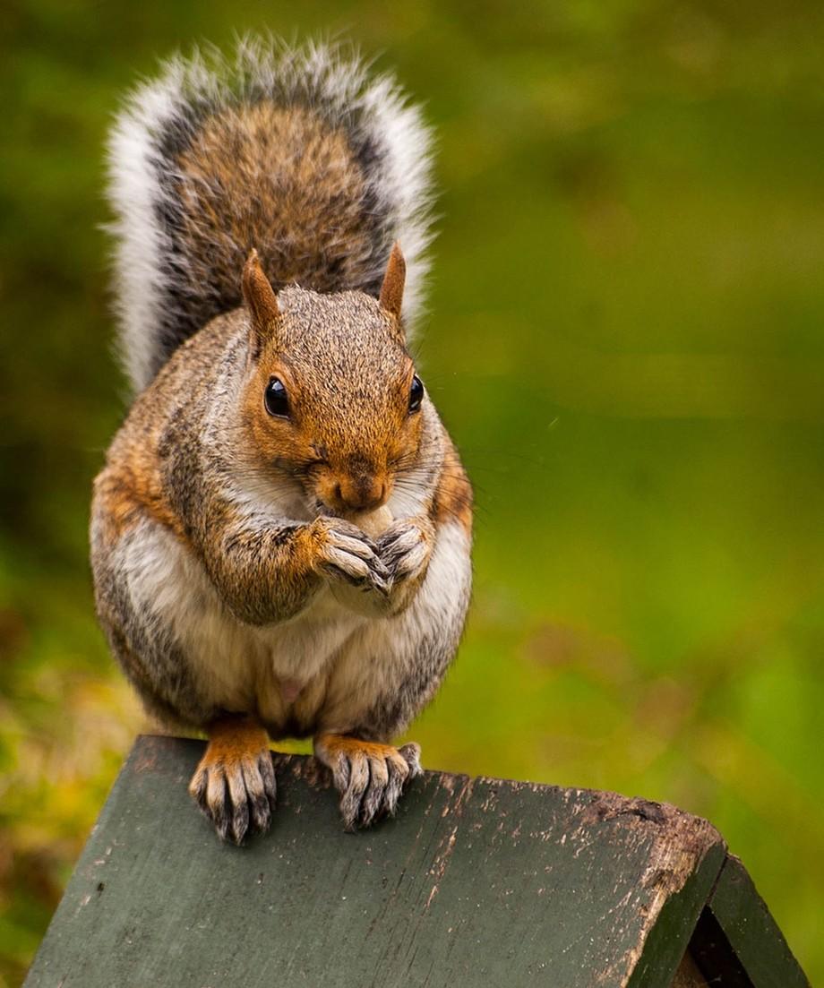 Squirrel-0029