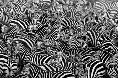 Zebra Meetup
