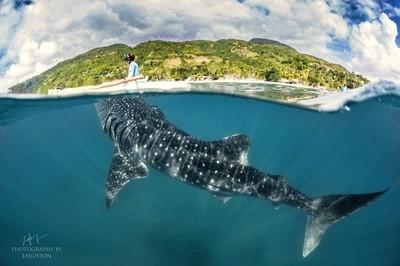 Over Under whale shark Cebu