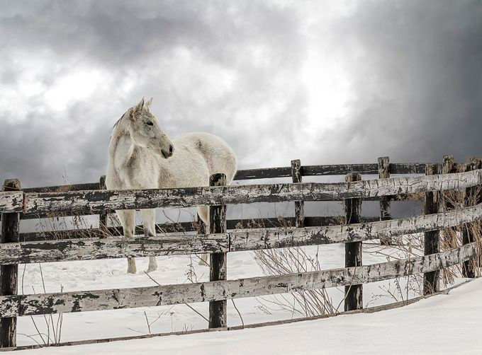 Winter Horse by David-B - Farms And Barns Animals Photo Contest