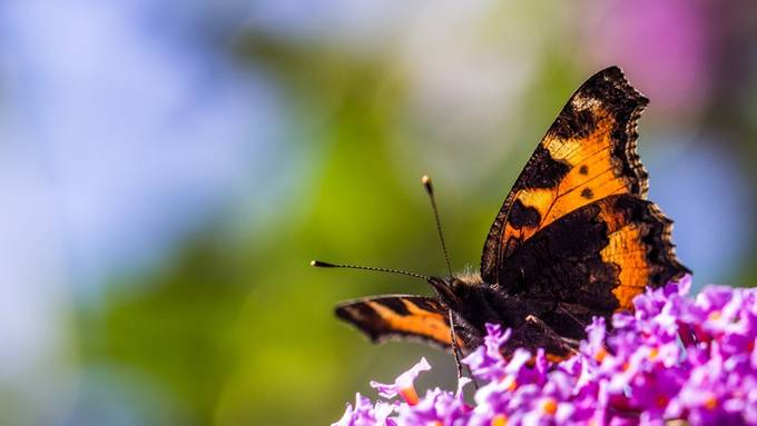 Butterfly and bokeh by Pourvendre - Beautiful Butterflies Photo Contest