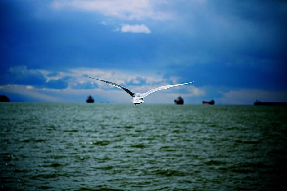 Seagull 4 - Version 2