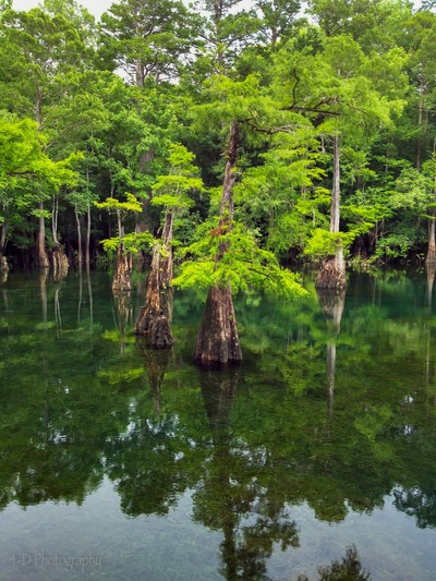 Morrison Springs Florida
