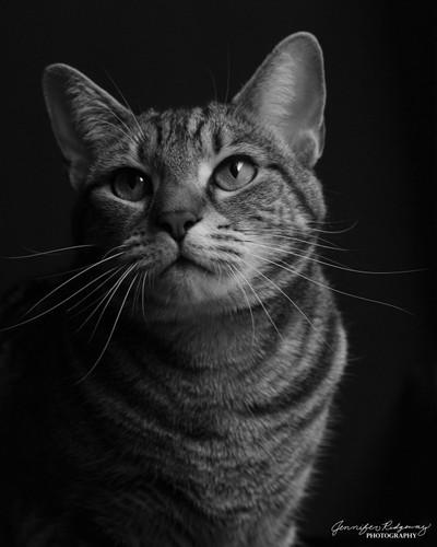 Roxie's Portrait I