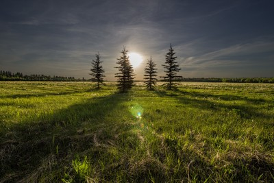 Tree Sunset - Exposure Correction