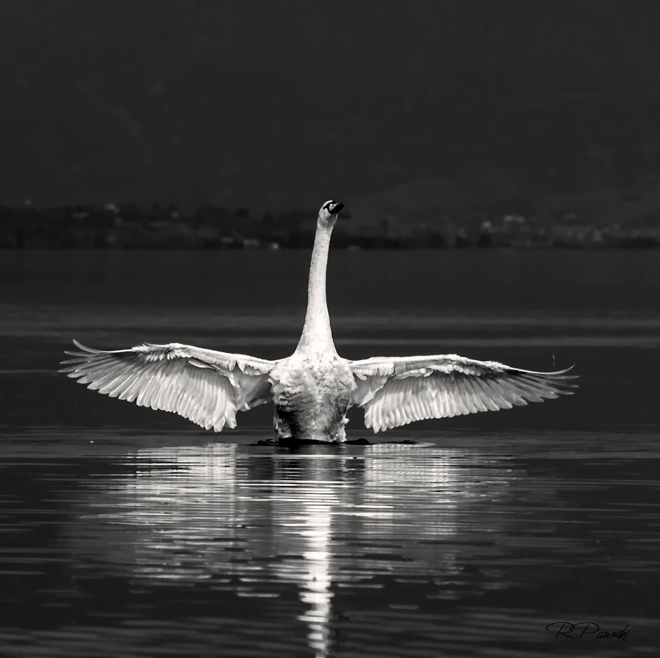 I was on a small boat, peaceful afternoon and after taking his bath he start to flapping with his...