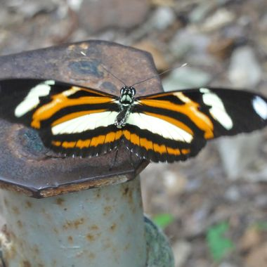 Yet to ID  Longwing