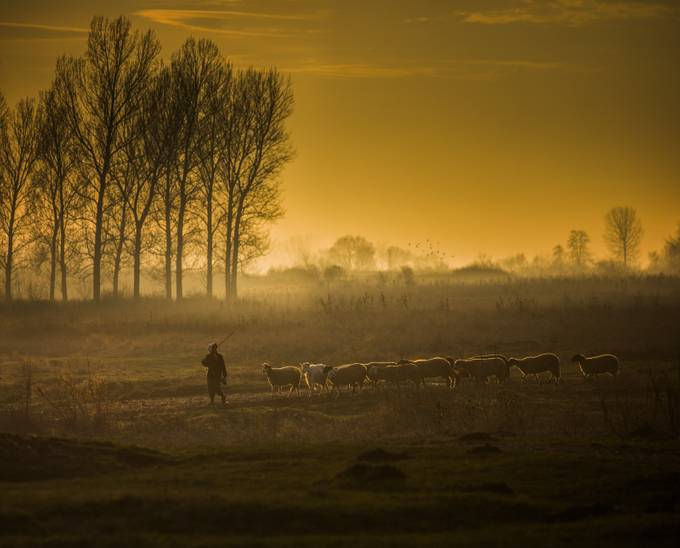 The Golden Fleece by swqaz - People In Large Areas Photo Contest