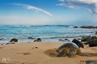 Turtles and rainbows
