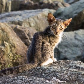 A kitten found along the shore off the wall of the San Juan Bay.