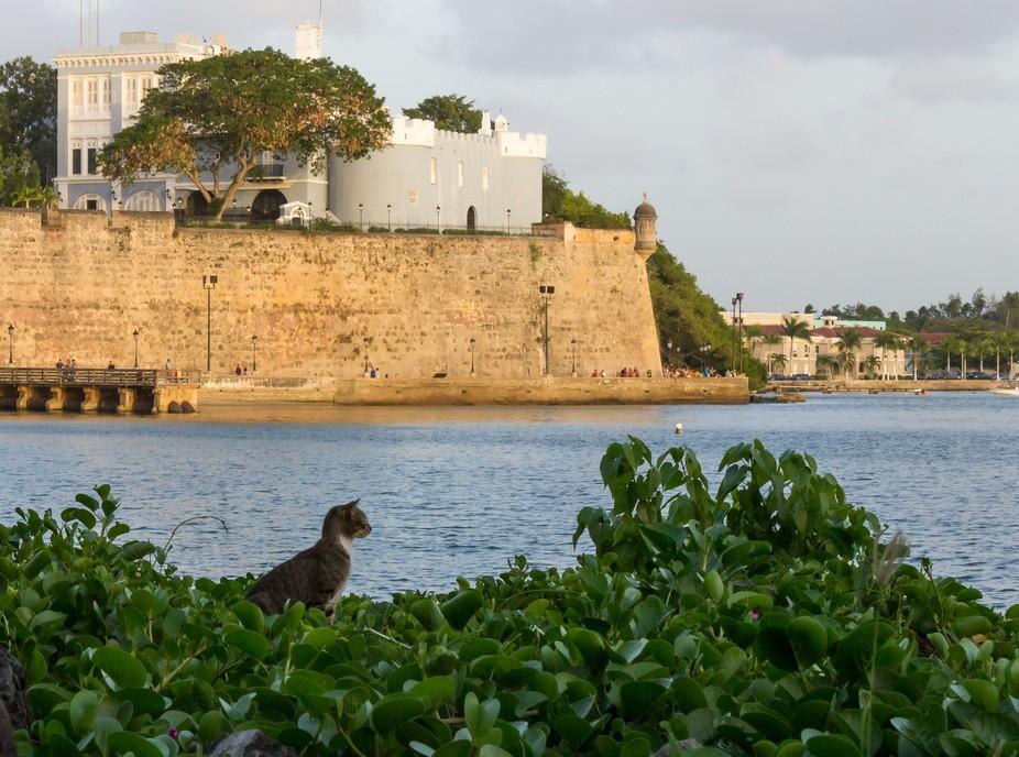 On the walk along the Old San Juan wall on the side of the San Juan Bay, a look at Santa Catalina...