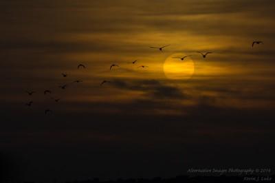 Birds Go Away