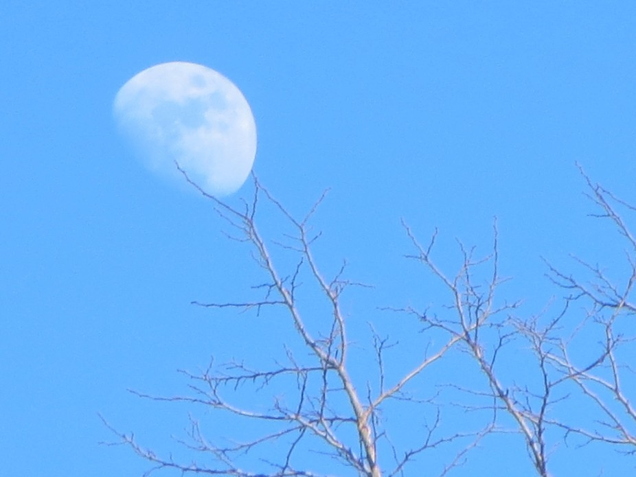 The moon in daylight looks like it's made of white lace.
