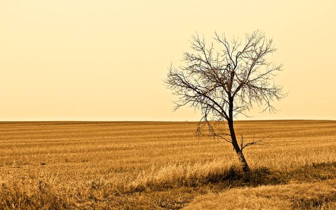 Lonesome Prairie by Blue-Maddness - Dry Fields Photo Contest