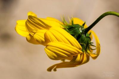 Flower in the Wind