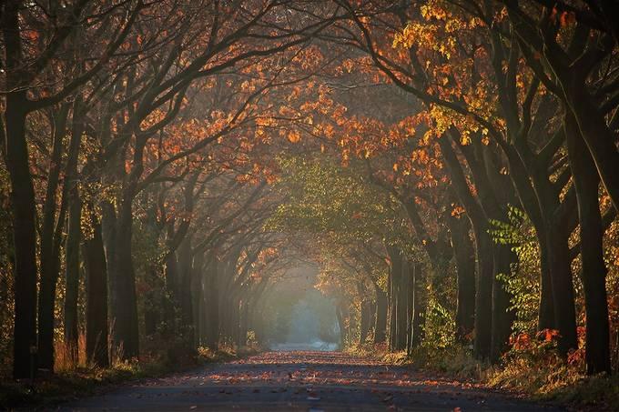 Misty Morning by Irene_van_Nunen - Fall 2016 Photo Contest