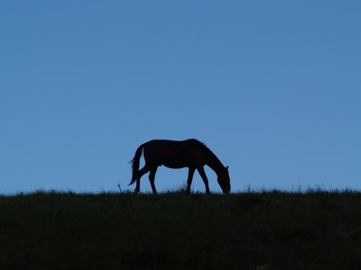 Drakensberg Horse Profile