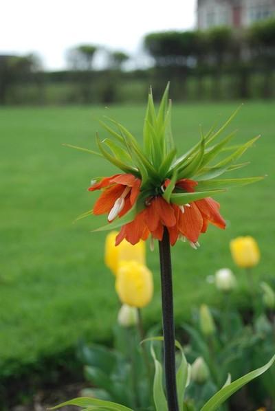 johns flower 1