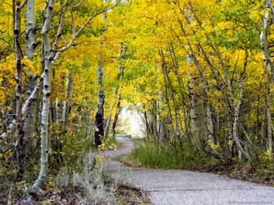 Silver Lake, Fall Color