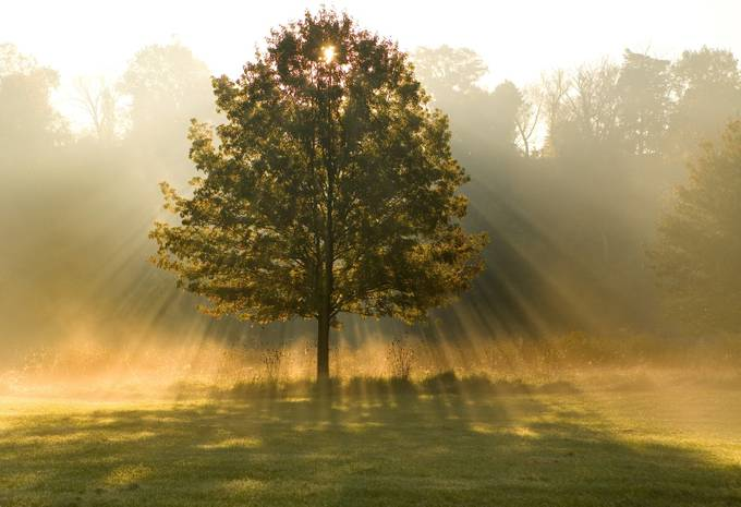 Morning Sprite by Ohiodaniel - A Lonely Tree Photo Contest