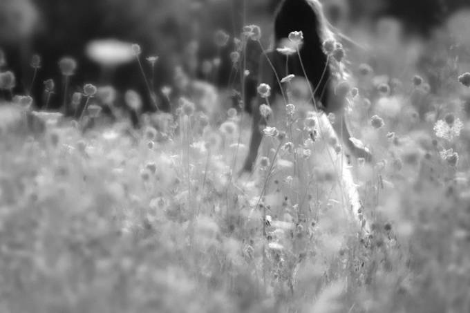 Pretty Field by HeartandHomePhotography - Blurred Subjects Photo Contest