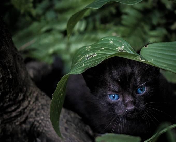 Hidden by vickiecrosbycarroll - Cute Kittens Photo Contest