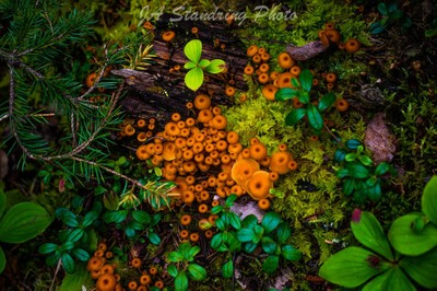 photo of the forest floor. by Theo-Herbots-Fotograaf