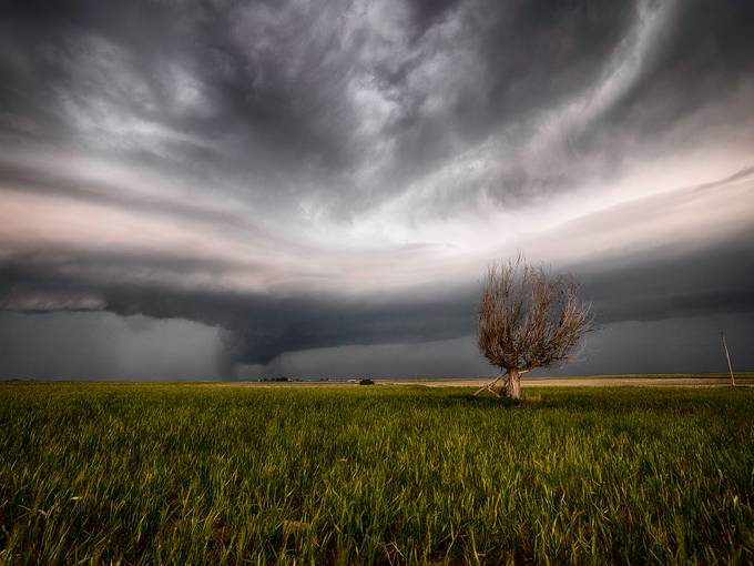 Two Trees by agefoto - A Lonely Tree Photo Contest