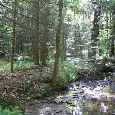 PA Creek