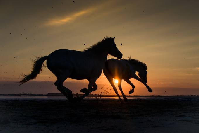 Camargue white horses silhouette by jg74 - Adventure Land Photo Contest Outside Views