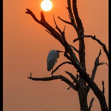 Sunrise trip to Bombay Hook, Delaware -- capturing a resting egret at sunrise.