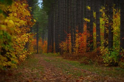 Red Pines, Hiawatha
