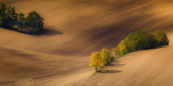 Autumn colors by marekbiegalski - Dry Fields Photo Contest
