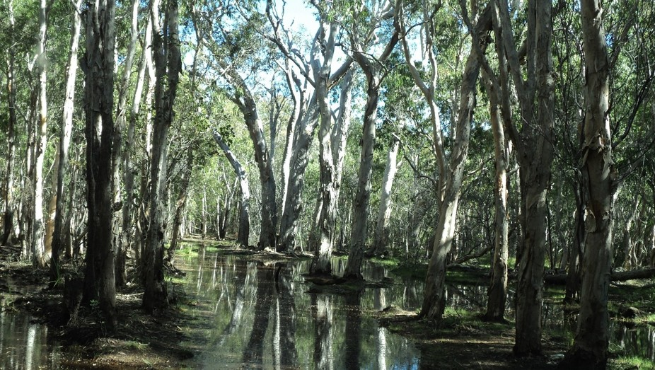 Palmerston waters