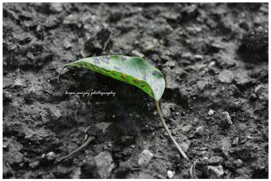 The Fallen yet Beauty