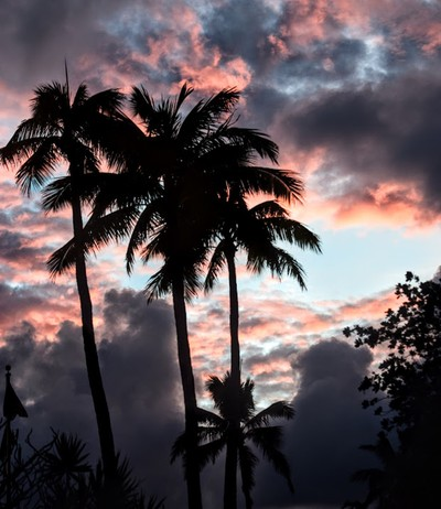 Down Where the Palm Trees Sway