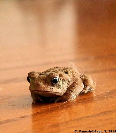 Sad Toad