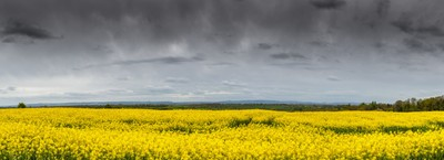 Somerset Colours