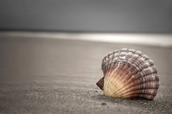 Seashell by oceansoulphotografix - Subjects On The Ground Photo Contest