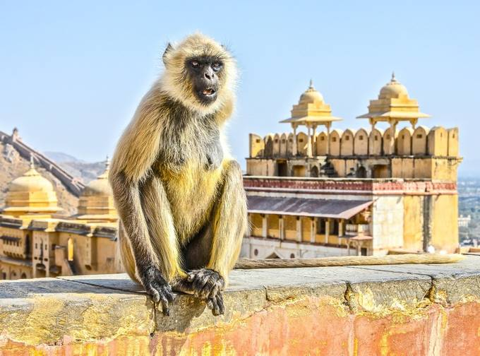 Monkey guard by ninapritikinzale - Explore Asia Photo Contest