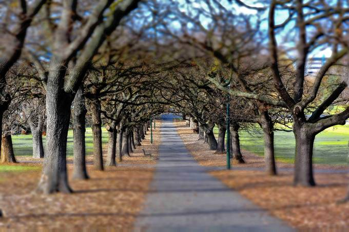 Fawkner Park. by Sandra-365 - TiltShift Effect Photo Contest