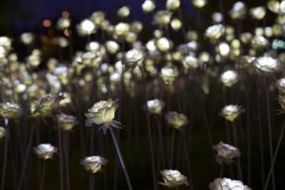 LED rose garden