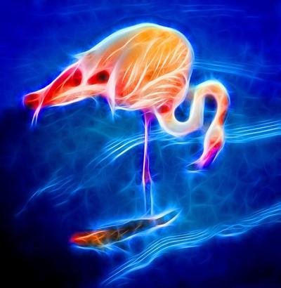 Neon Flamingo & Friend