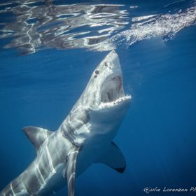 i took this photo last week at Guadalupe Island , just last week.