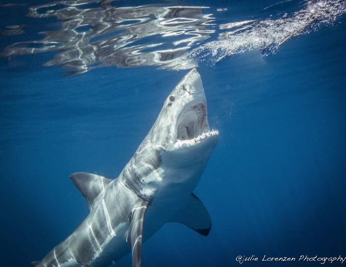 Open Jaws by Oliveoyle1 - Monthly Pro Vol 21 Photo Contest